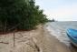 Beachfront Monkey River